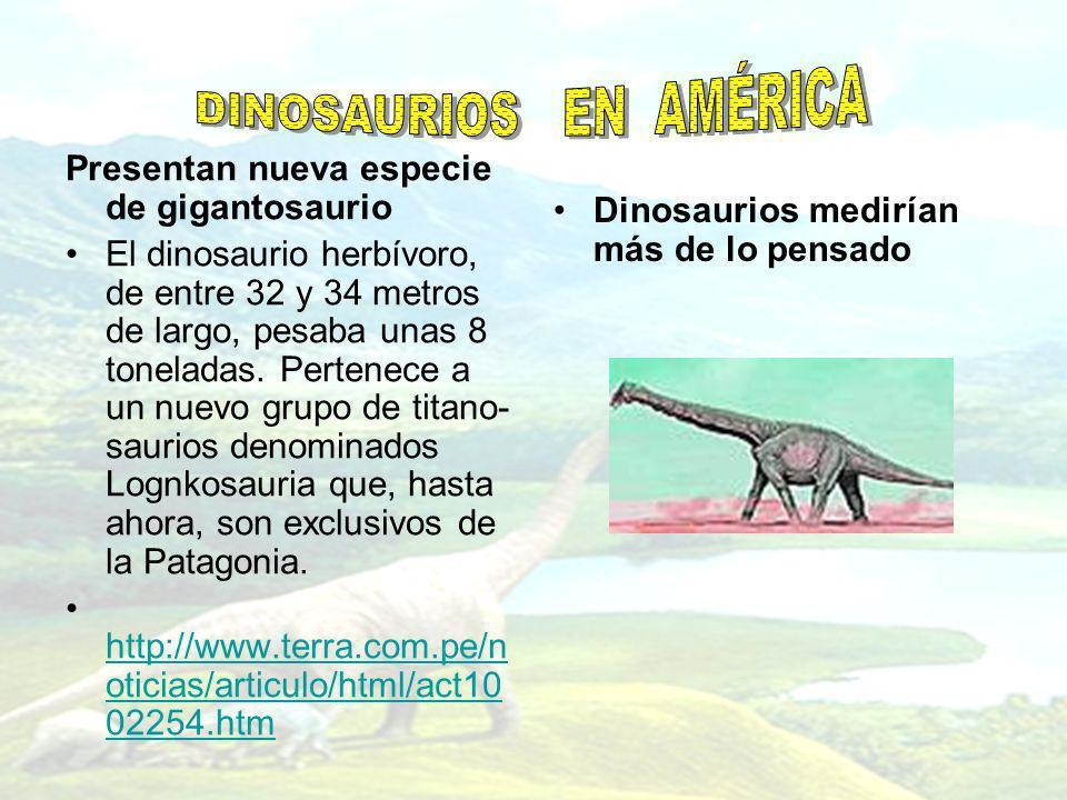 Presentan nueva especie de gigantosaurio El dinosaurio herbívoro, de entre 32 y 34 metros de largo, pesaba unas 8 toneladas. Pertenece a un nuevo grup