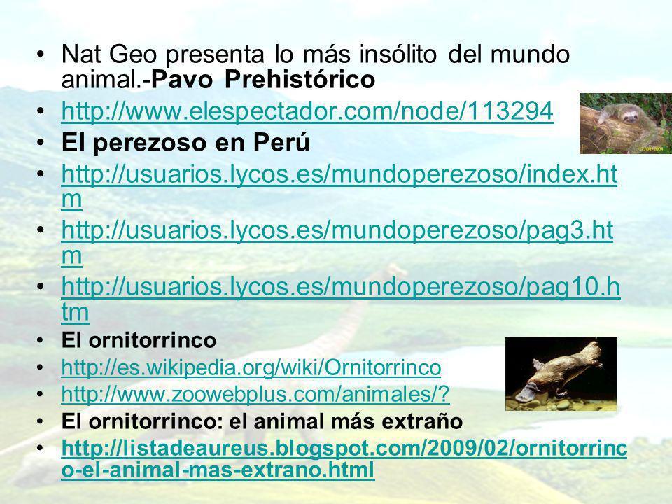 Nat Geo presenta lo más insólito del mundo animal.-Pavo Prehistórico http://www.elespectador.com/node/113294 El perezoso en Perú http://usuarios.lycos