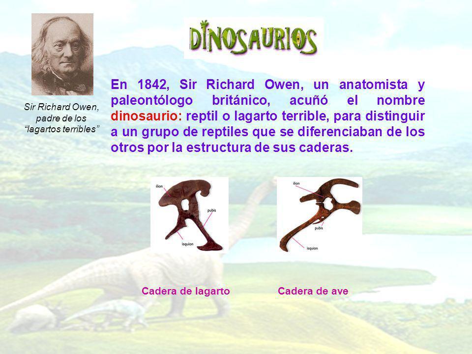 En 1842, Sir Richard Owen, un anatomista y paleontólogo británico, acuñó el nombre dinosaurio: reptil o lagarto terrible, para distinguir a un grupo d