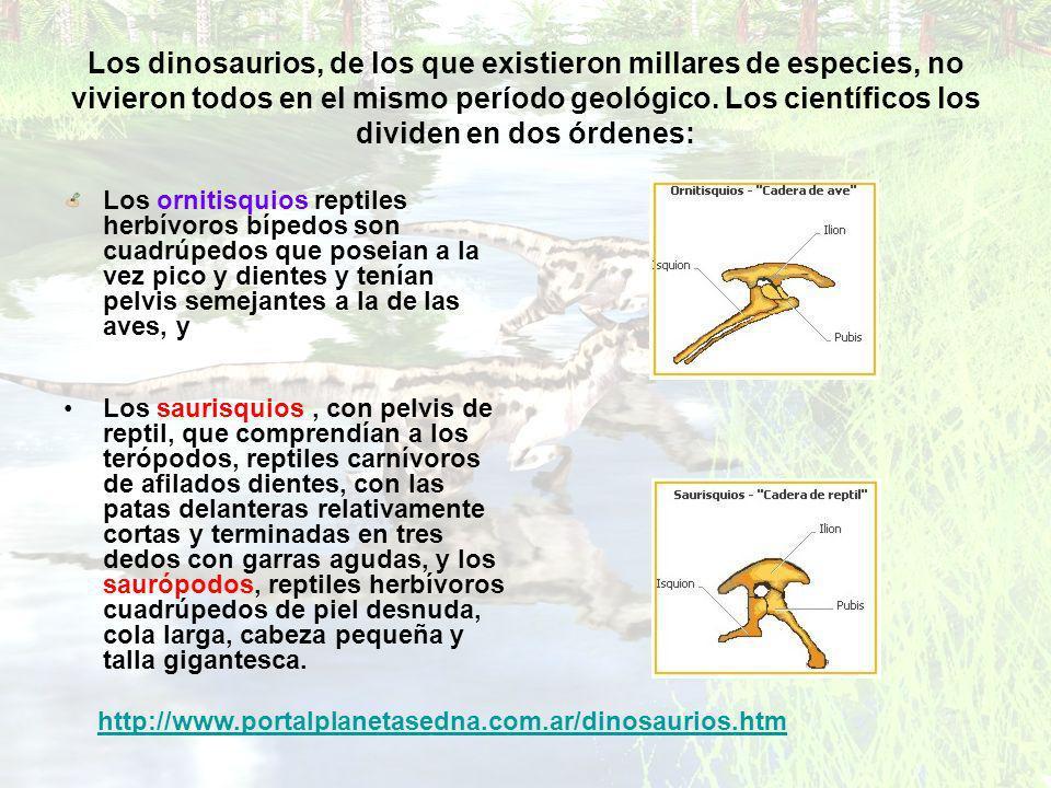 Los dinosaurios, de los que existieron millares de especies, no vivieron todos en el mismo período geológico. Los científicos los dividen en dos órden