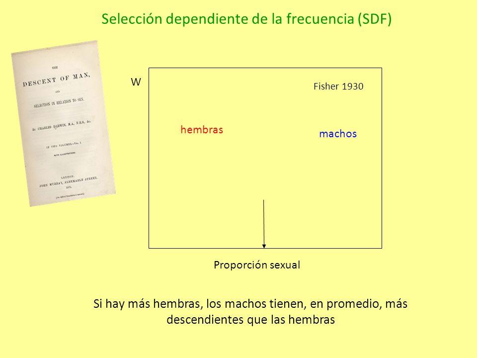 Proporción sexual hembras machos W Fisher 1930 Si hay más hembras, los machos tienen, en promedio, más descendientes que las hembras Selección dependiente de la frecuencia (SDF)