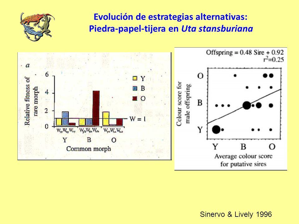 Evolución de estrategias alternativas: Piedra-papel-tijera en Uta stansburiana Sinervo & Lively 1996