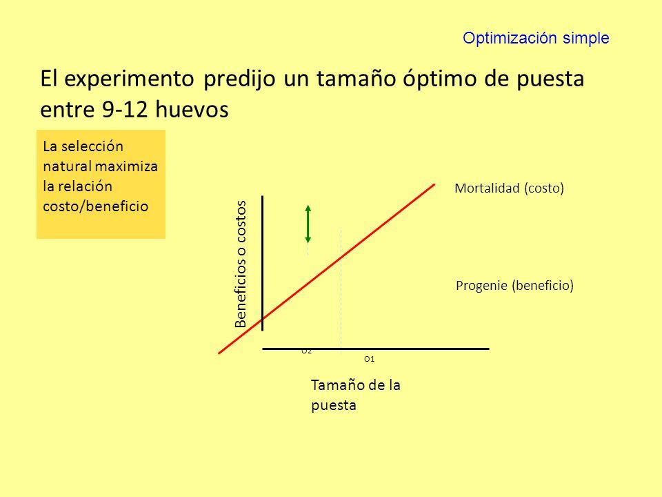 El experimento predijo un tamaño óptimo de puesta entre 9-12 huevos Mortalidad (costo) Progenie (beneficio) Tamaño de la puesta Beneficios o costos O1 O2 La selección natural maximiza la relación costo/beneficio Optimización simple