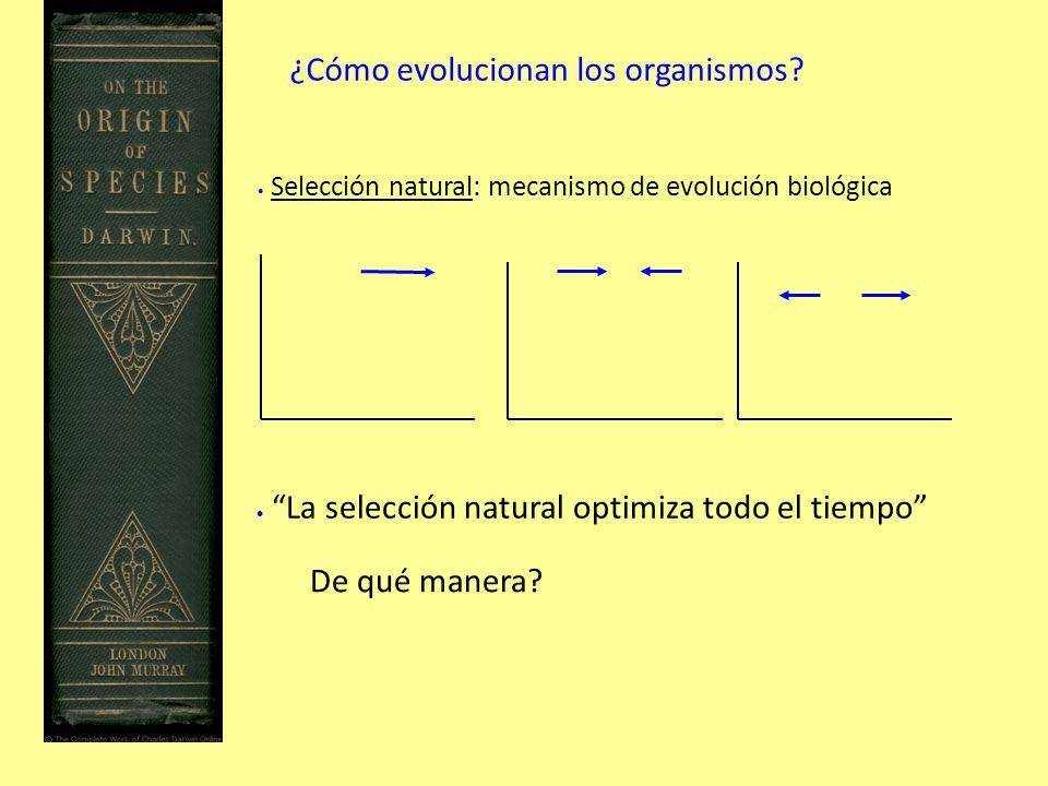 ¿Cómo evolucionan los organismos.