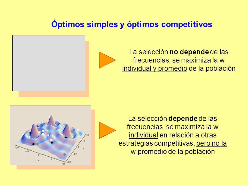 Óptimos simples y óptimos competitivos La selección no depende de las frecuencias, se maximiza la w individual y promedio de la población La selección depende de las frecuencias, se maximiza la w individual en relación a otras estrategias competitivas, pero no la w promedio de la población