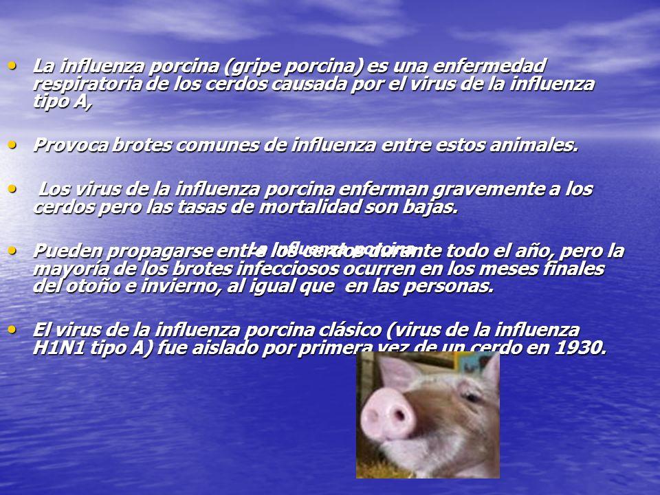 ¿Qué es la influenza porcina?