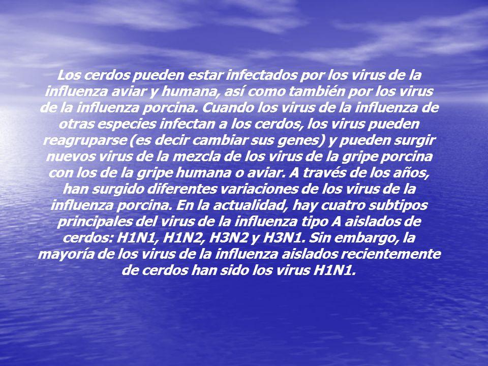 La influenza porcina (gripe porcina) es una enfermedad respiratoria de los cerdos causada por el virus de la influenza tipo A, La influenza porcina (g