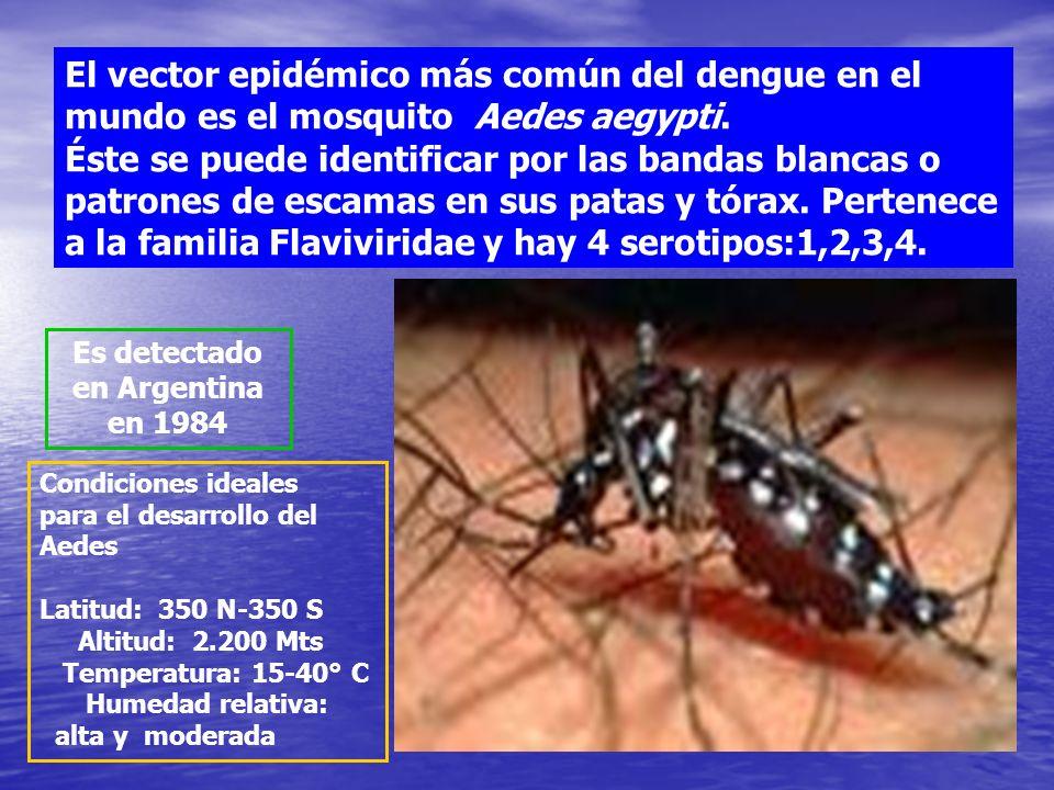 Definición de DENGUE El dengue es una enfermedad causada por un virus que se transmite únicamente a través de la picadura de un mosquito: El dengue es