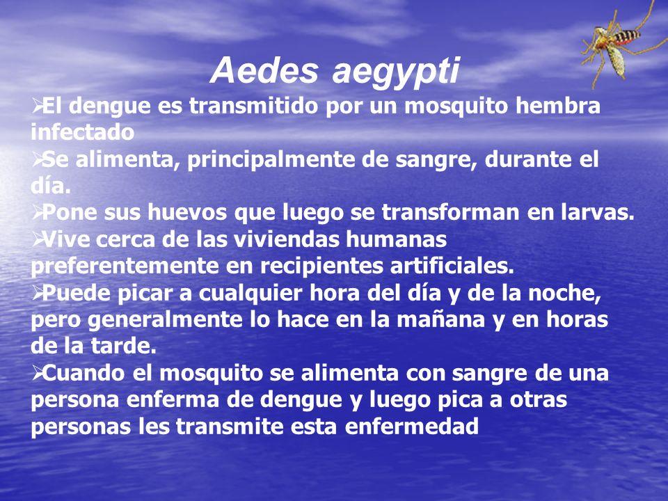 El vector epidémico más común del dengue en el mundo es el mosquito Aedes aegypti. Éste se puede identificar por las bandas blancas o patrones de esca