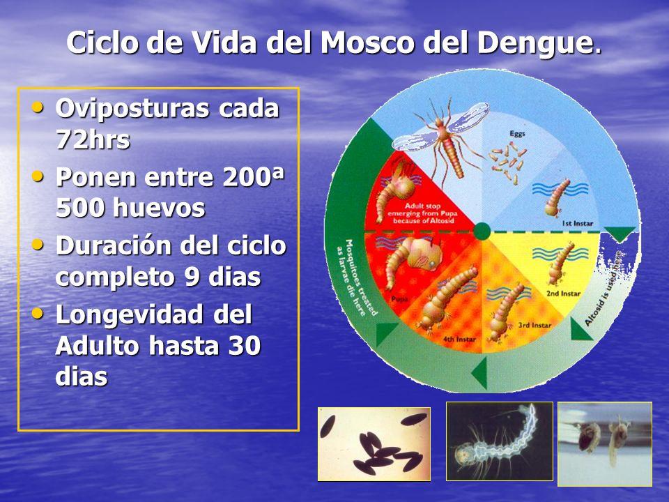 Ciclo de vida del mosquito CICLO DE VIDA