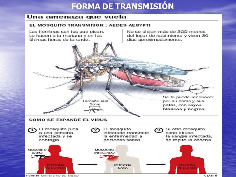 Ciclo de Vida del Mosco del Dengue. Oviposturas cada 72hrs Ponen entre 200ª 500 huevos Duración del ciclo completo 9 dias Longevidad del Adulto hasta