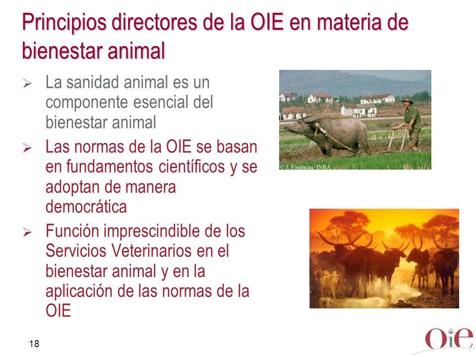 18 Principios directores de la OIE en materia de bienestar animal La sanidad animal es un componente esencial del bienestar animal Las normas de la OI