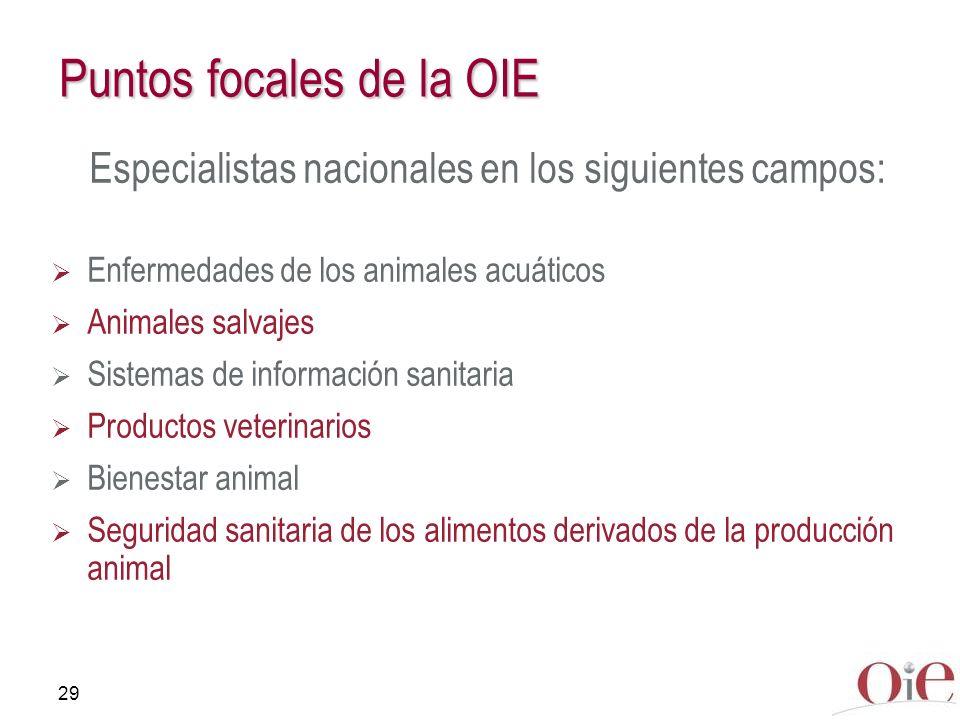 29 Puntos focales de la OIE Especialistas nacionales en los siguientes campos: Enfermedades de los animales acuáticos Animales salvajes Sistemas de in