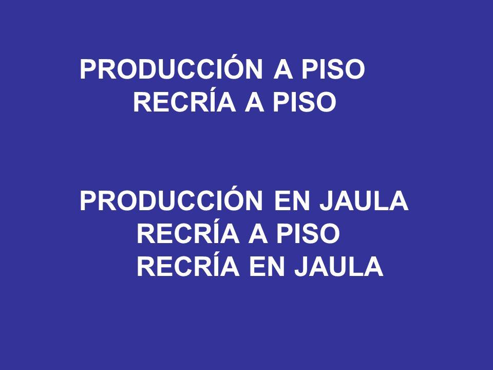 PRODUCCIÓN A PISO RECRÍA A PISO PRODUCCIÓN EN JAULA RECRÍA A PISO RECRÍA EN JAULA