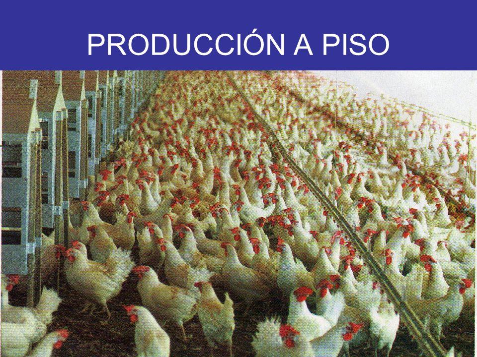 PRODUCCIÓN A PISO