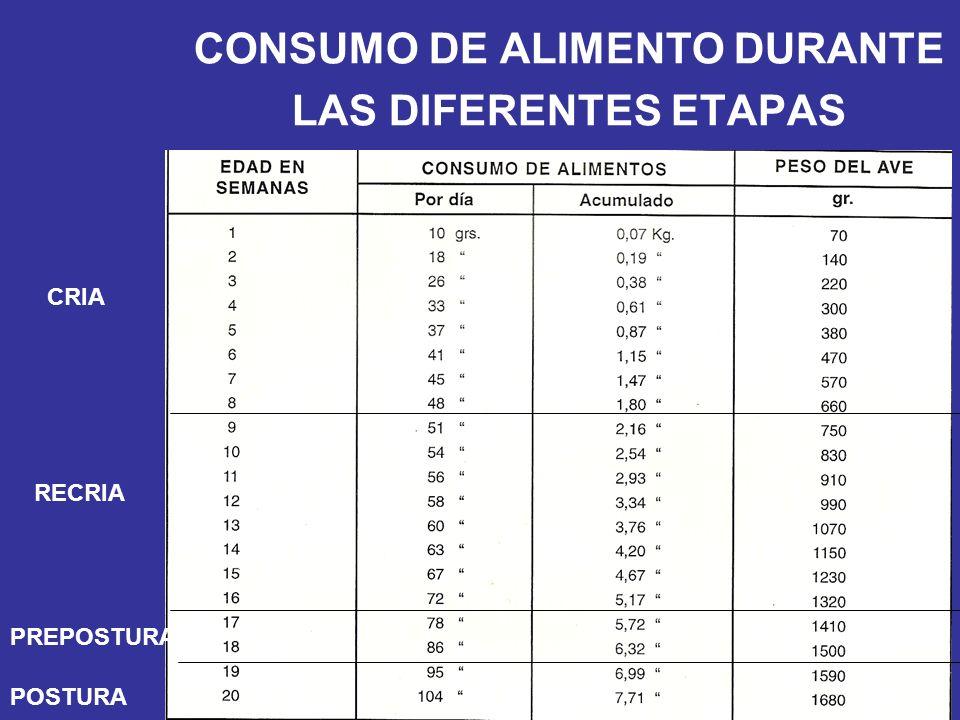 CONSUMO DE ALIMENTO DURANTE LAS DIFERENTES ETAPAS CRIA RECRIA PREPOSTURA POSTURA