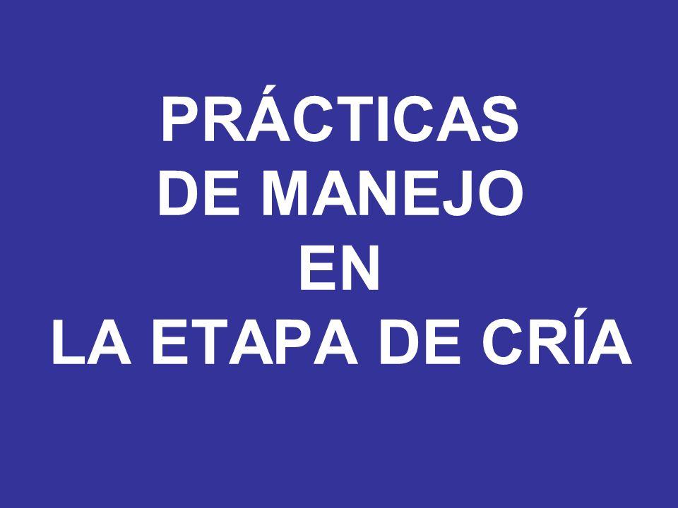 PRÁCTICAS DE MANEJO EN LA ETAPA DE CRÍA
