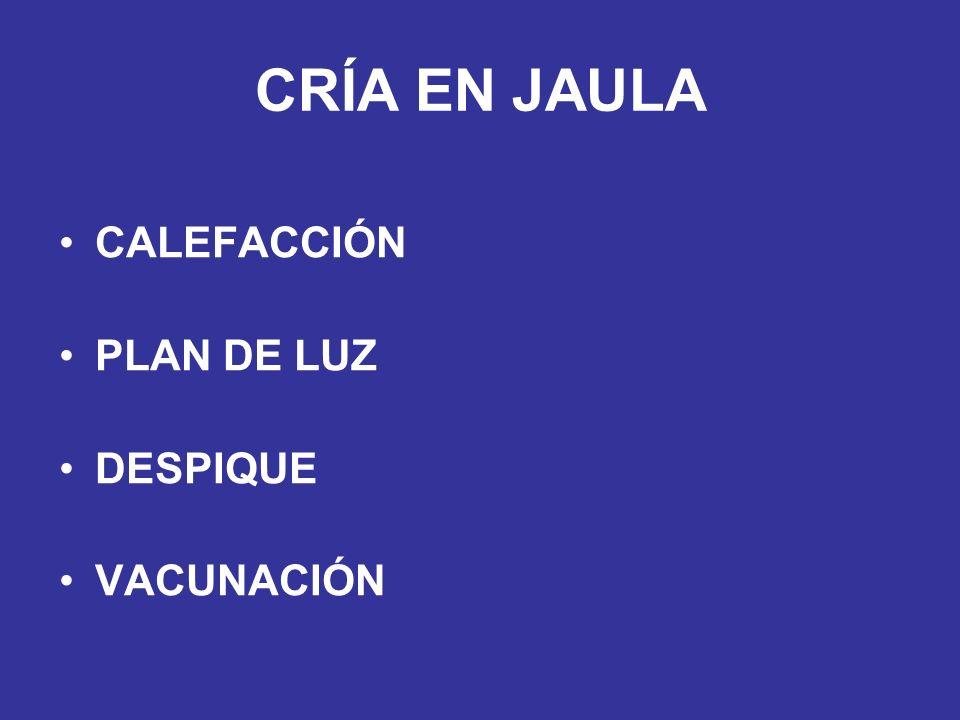 CALEFACCIÓN PLAN DE LUZ DESPIQUE VACUNACIÓN CRÍA EN JAULA