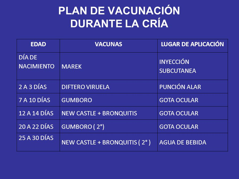 PLAN DE VACUNACIÓN DURANTE LA CRÍA EDADVACUNASLUGAR DE APLICACIÓN DÍA DE NACIMIENTO MAREK INYECCIÓN SUBCUTANEA 2 A 3 DÍASDIFTERO VIRUELAPUNCIÓN ALAR 7 A 10 DÍASGUMBOROGOTA OCULAR 12 A 14 DÍASNEW CASTLE + BRONQUITISGOTA OCULAR 20 A 22 DÍASGUMBORO ( 2°)GOTA OCULAR 25 A 30 DÍAS NEW CASTLE + BRONQUITIS ( 2° )AGUA DE BEBIDA