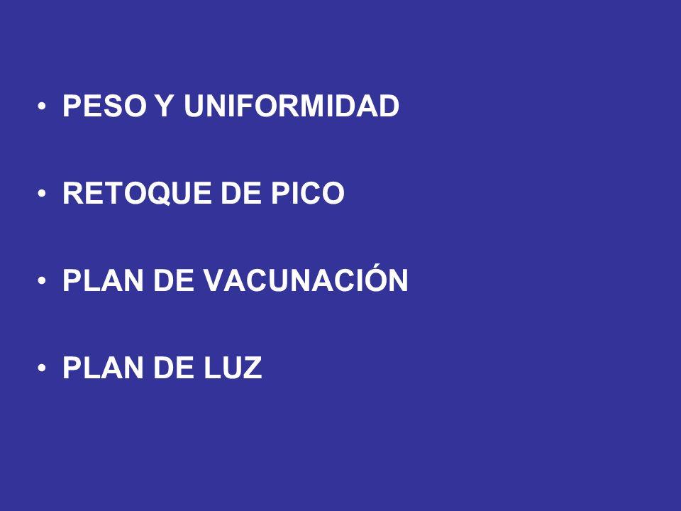 PESO Y UNIFORMIDAD RETOQUE DE PICO PLAN DE VACUNACIÓN PLAN DE LUZ