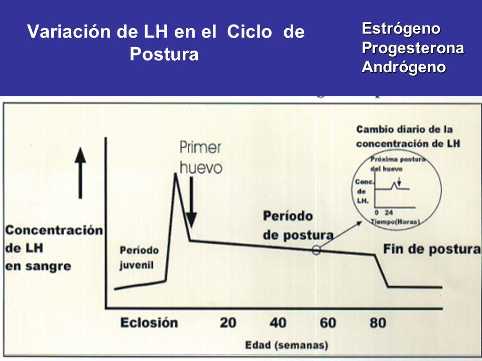 Variación de LH en el Ciclo de Postura Estrógeno Progesterona Andrógeno