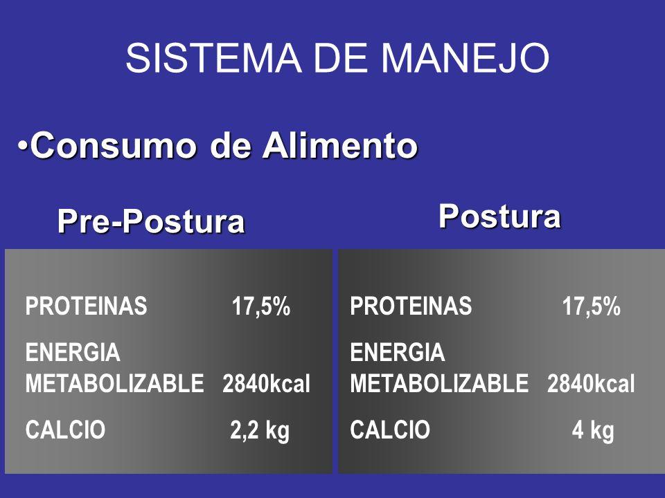 SISTEMA DE MANEJO Consumo de AlimentoConsumo de Alimento Pre-Postura PROTEINAS 17,5% ENERGIA METABOLIZABLE 2840kcal CALCIO 2,2 kg PROTEINAS 17,5% ENERGIA METABOLIZABLE 2840kcal CALCIO 4 kg Postura