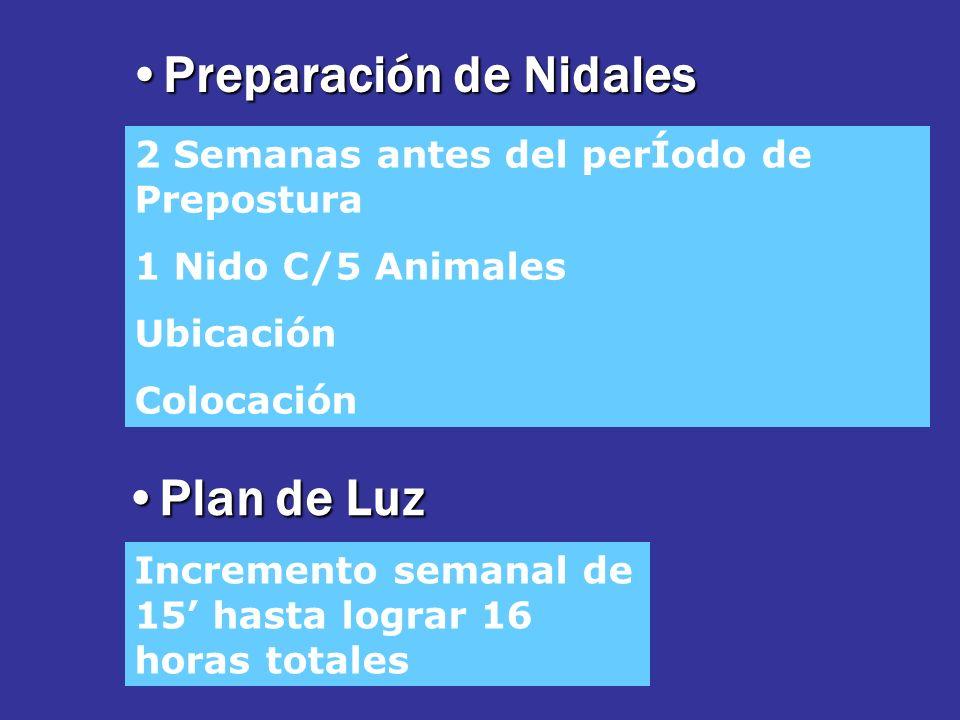 Preparación de NidalesPreparación de Nidales 2 Semanas antes del perÍodo de Prepostura 1 Nido C/5 Animales Ubicación Colocación Plan de LuzPlan de Luz Incremento semanal de 15 hasta lograr 16 horas totales