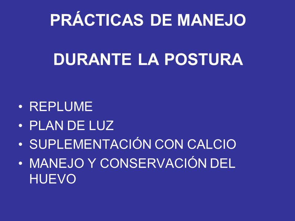 PRÁCTICAS DE MANEJO DURANTE LA POSTURA REPLUME PLAN DE LUZ SUPLEMENTACIÓN CON CALCIO MANEJO Y CONSERVACIÓN DEL HUEVO