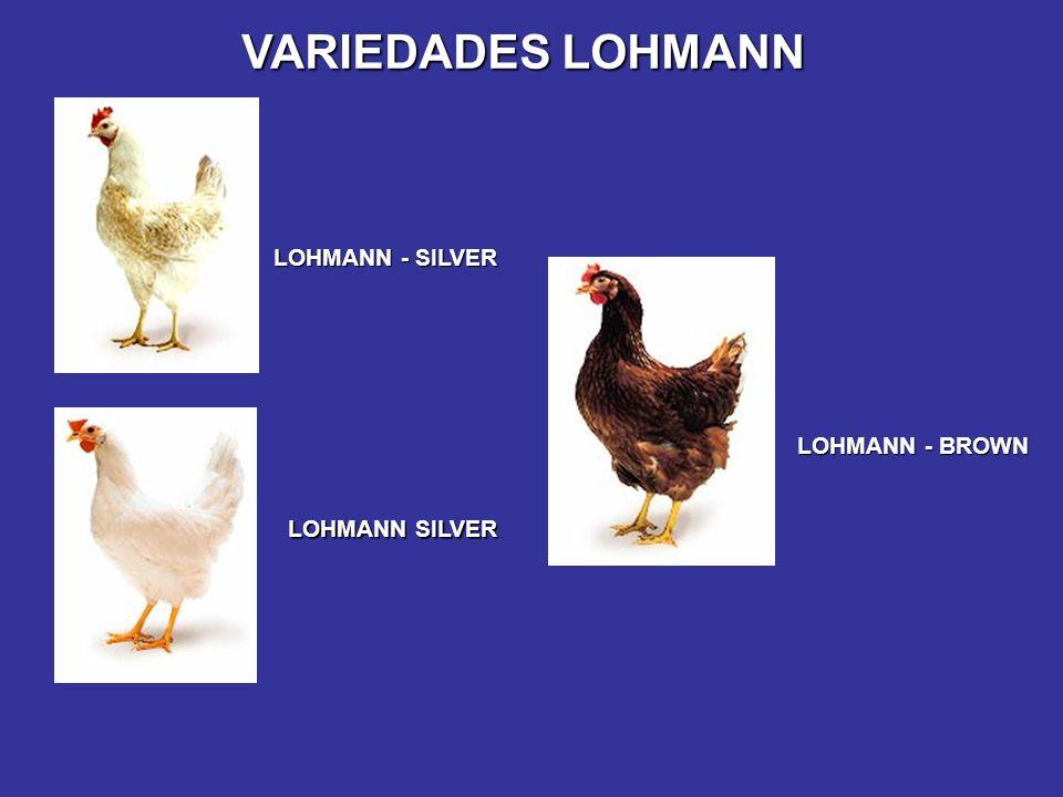 VARIEDADES LOHMANN LOHMANN SILVER LOHMANN - BROWN LOHMANN - SILVER