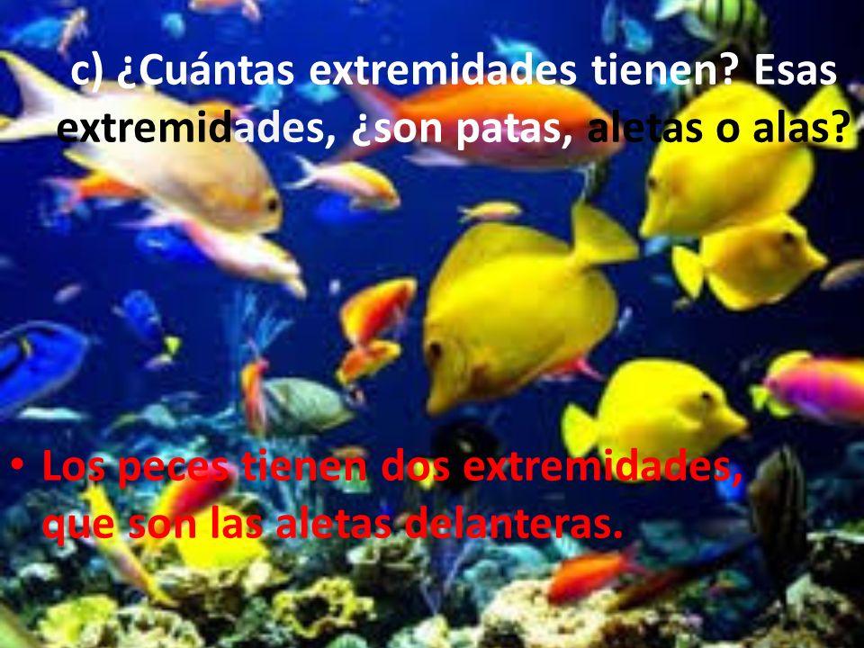 c) ¿Cuántas extremidades tienen? Esas extremidades, ¿son patas, aletas o alas? Los peces tienen dos extremidades, que son las aletas delanteras.