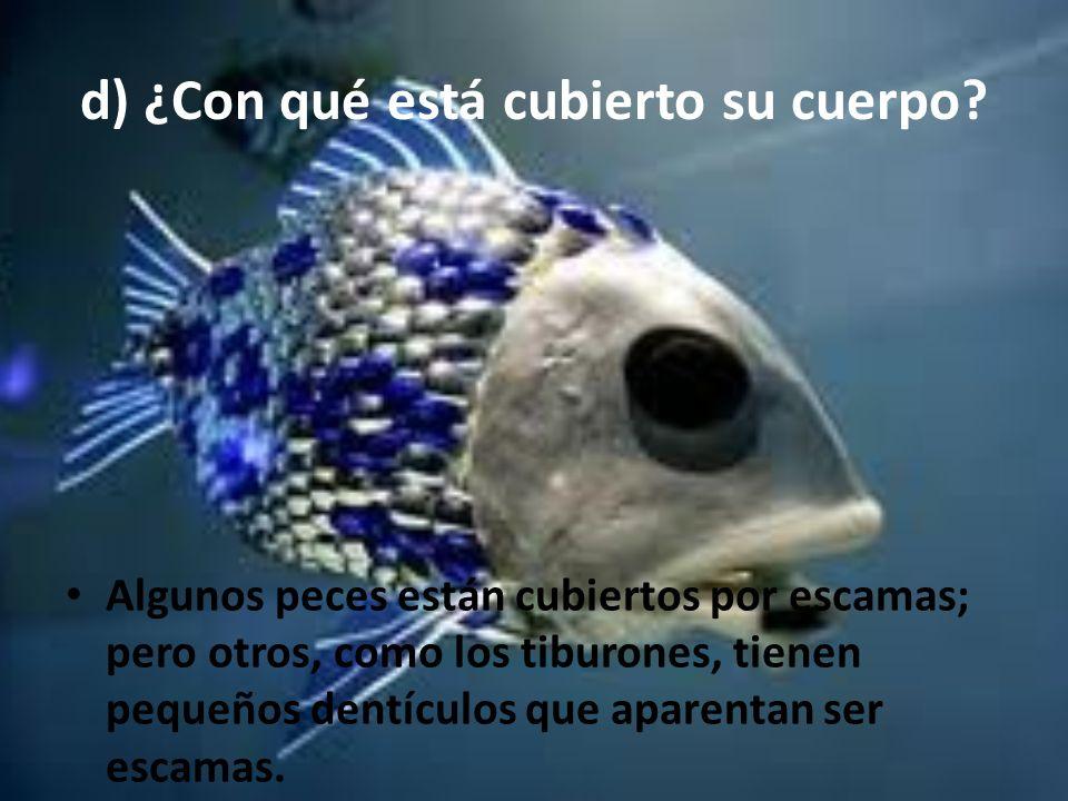 d) ¿Con qué está cubierto su cuerpo? Algunos peces están cubiertos por escamas; pero otros, como los tiburones, tienen pequeños dentículos que aparent