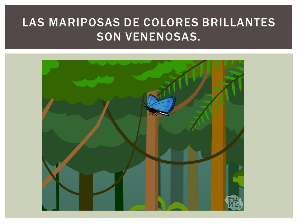 LAS MARIPOSAS DE COLORES BRILLANTES SON VENENOSAS.