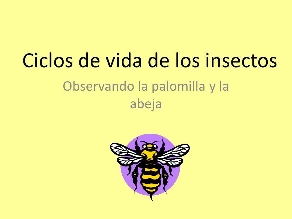 Ciclos de vida de los insectos Observando la palomilla y la abeja