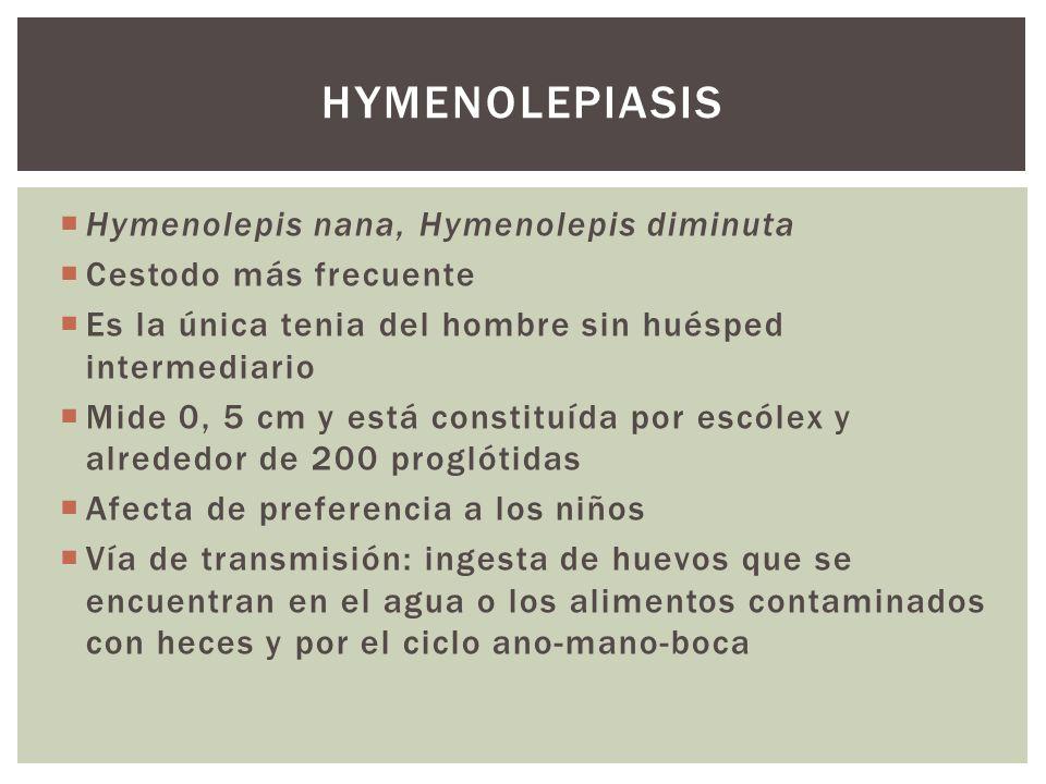 Hymenolepis nana, Hymenolepis diminuta Cestodo más frecuente Es la única tenia del hombre sin huésped intermediario Mide 0, 5 cm y está constituída po