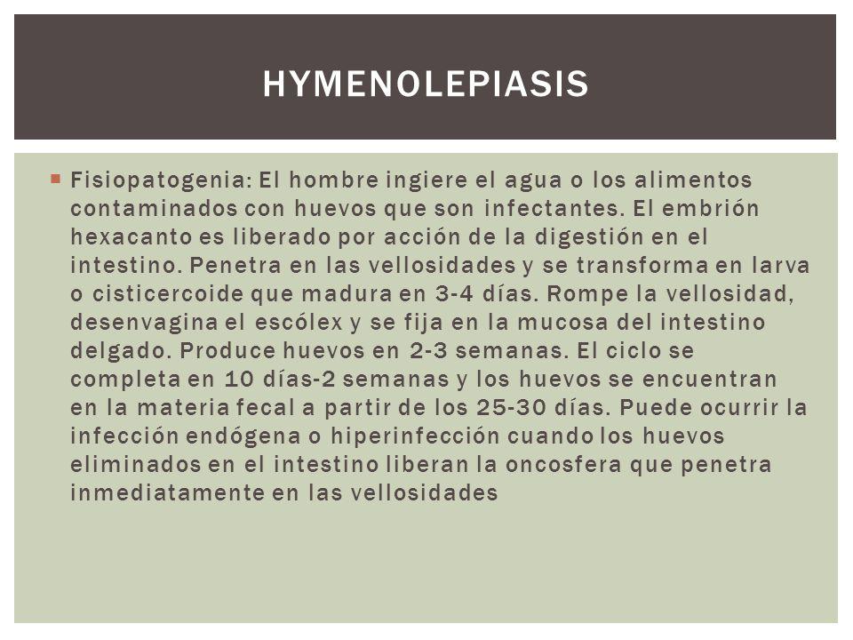 Fisiopatogenia: El hombre ingiere el agua o los alimentos contaminados con huevos que son infectantes. El embrión hexacanto es liberado por acción de