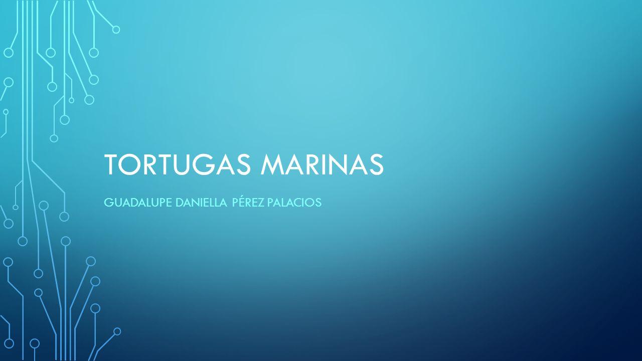TORTUGAS MARINAS GUADALUPE DANIELLA PÉREZ PALACIOS