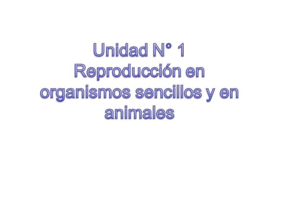 Reproducción dan lugar a descendientes semejantes a ellos mismos Mediante la reproducción los organismos dan lugar a descendientes semejantes a ellos mismos.