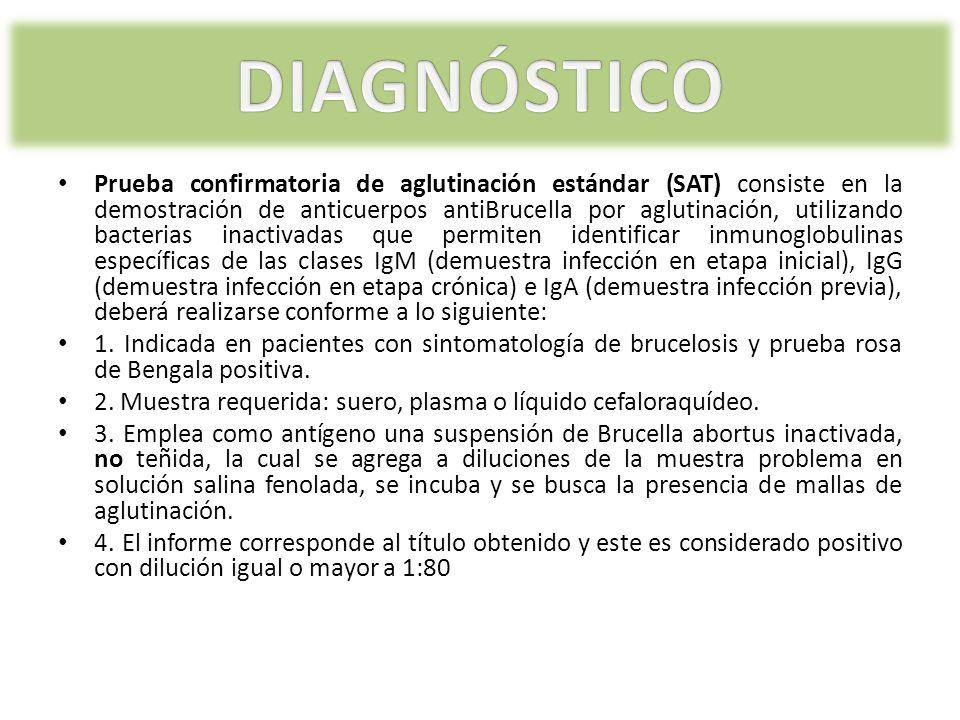 Prueba confirmatoria de aglutinación estándar (SAT) consiste en la demostración de anticuerpos antiBrucella por aglutinación, utilizando bacterias ina