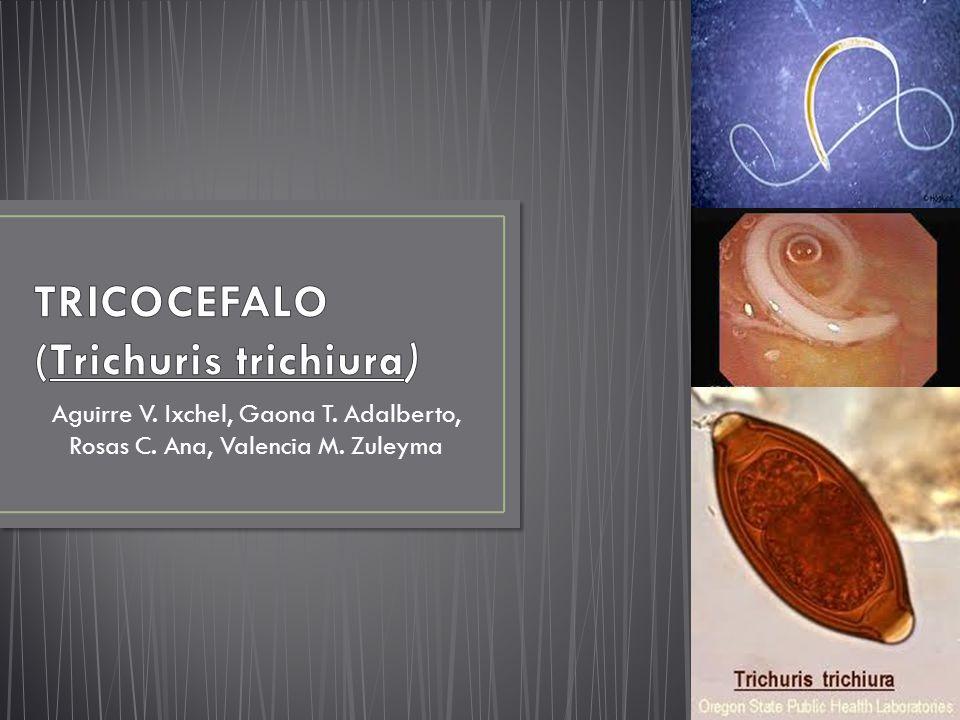Aguirre V. Ixchel, Gaona T. Adalberto, Rosas C. Ana, Valencia M. Zuleyma