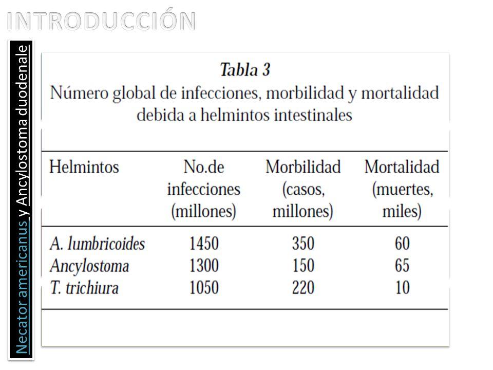 Necator americanus y Ancylostoma duodenale Para 1998 la OMS calculó que la esquistosomiasis y las helmintiasis transmitidas por el suelo fueron respon