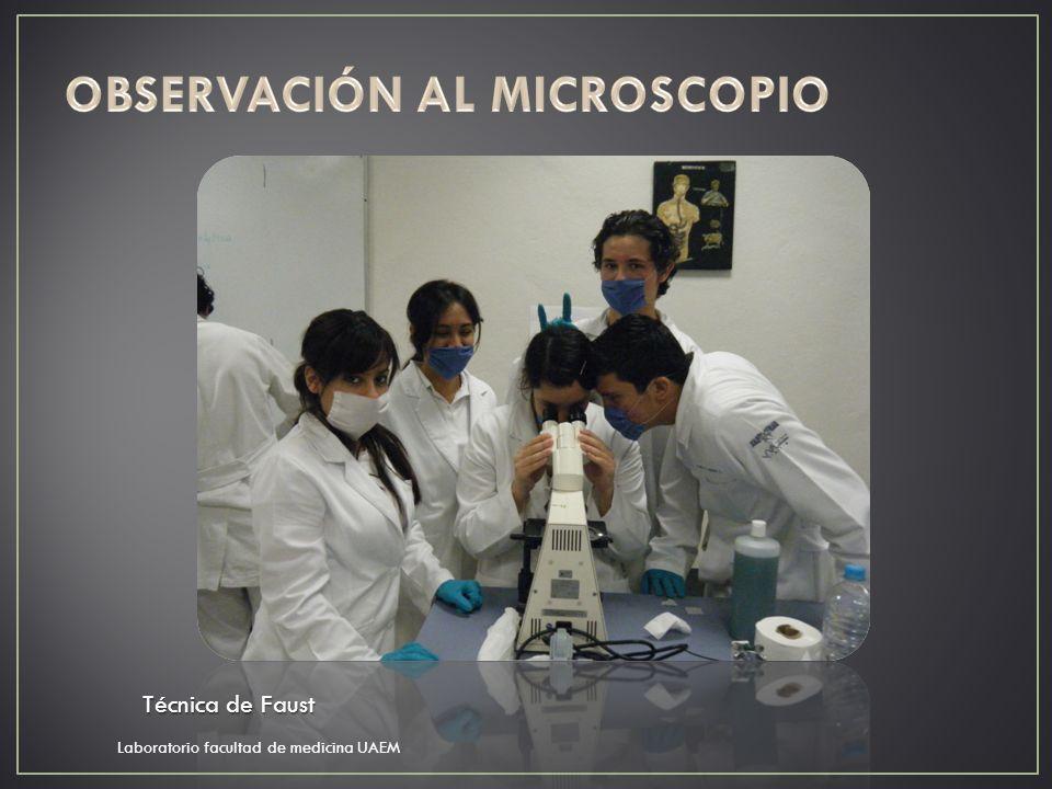 Laboratorio facultad de medicina UAEM