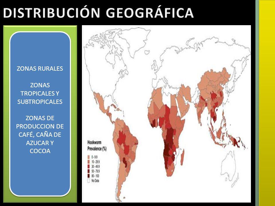 ZONAS RURALES ZONAS TROPICALES Y SUBTROPICALES ZONAS DE PRODUCCION DE CAFÉ, CAÑA DE AZUCAR Y COCOA ZONAS RURALES ZONAS TROPICALES Y SUBTROPICALES ZONA