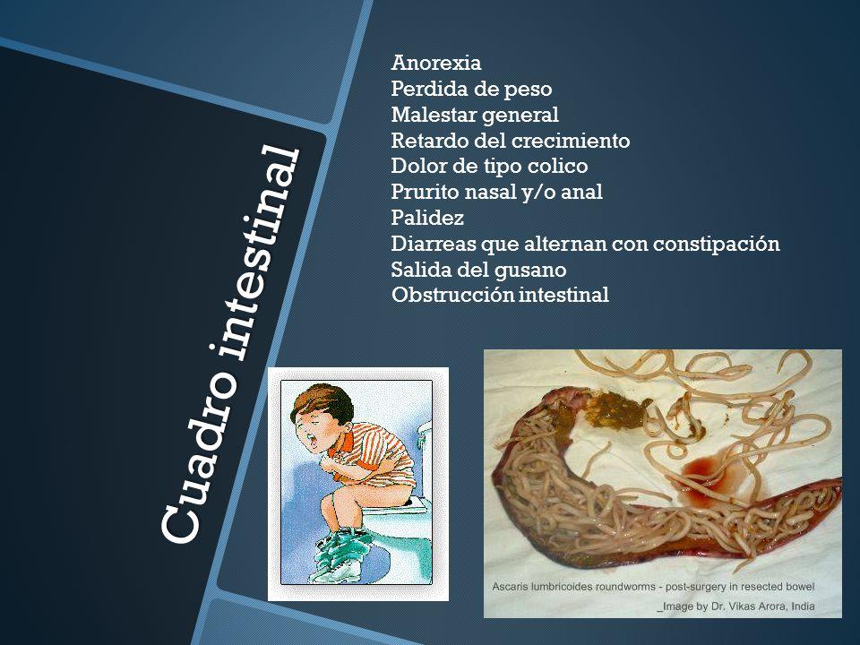 Cuadro intestinal Anorexia Perdida de peso Malestar general Retardo del crecimiento Dolor de tipo colico Prurito nasal y/o anal Palidez Diarreas que a