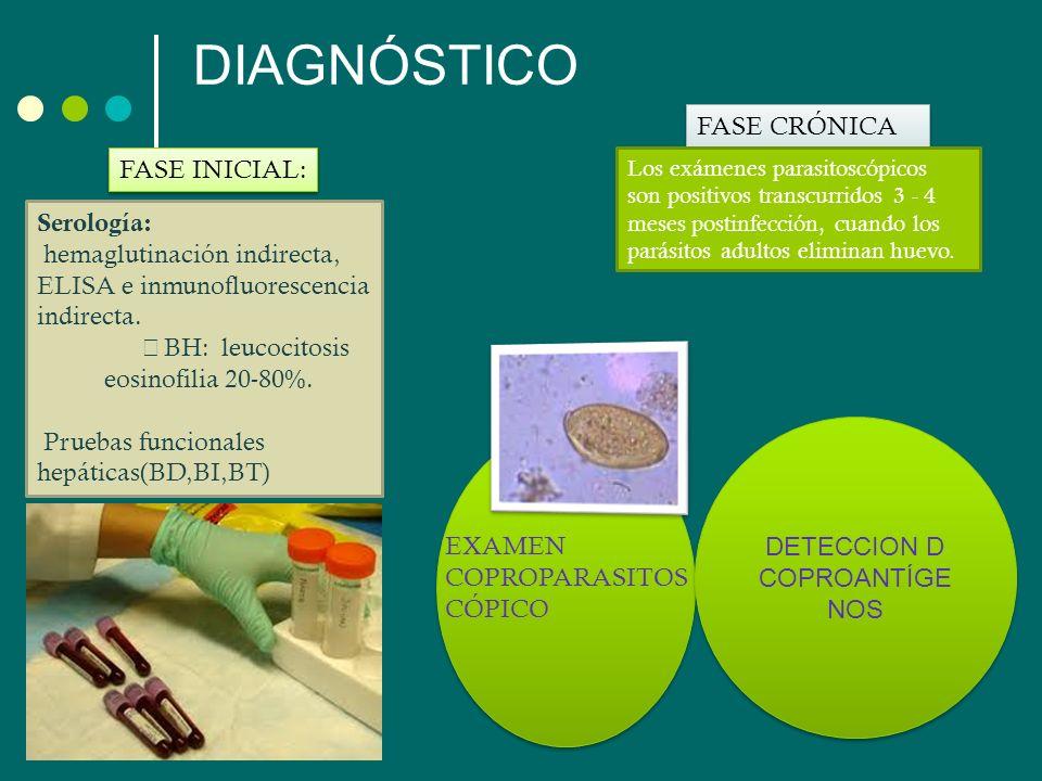 DIAGNÓSTICO FASE INICIAL: FASE CRÓNICA Serología: hemaglutinación indirecta, ELISA e inmunofluorescencia indirecta. BH: leucocitosis eosinofilia 20-80
