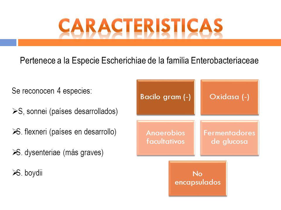 Bacilo gram (-) Oxidasa (-) Anaerobios facultativos Fermentado res de glucosa No encapsulado s Se reconocen 4 especies: S, sonnei (países desarrollado