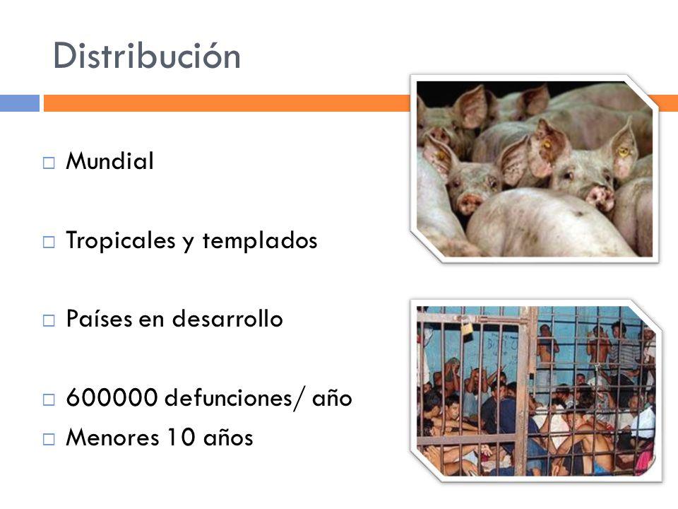 Distribución Mundial Tropicales y templados Países en desarrollo 600000 defunciones/ año Menores 10 años