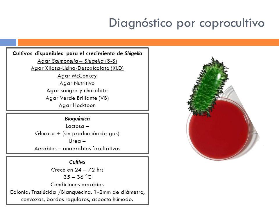 Diagnóstico por coprocultivo Cultivos disponibles para el crecimiento de Shigella Agar Salmonella – Shigella (S-S) Agar Xilosa-Lisina-Desoxicolato (XL