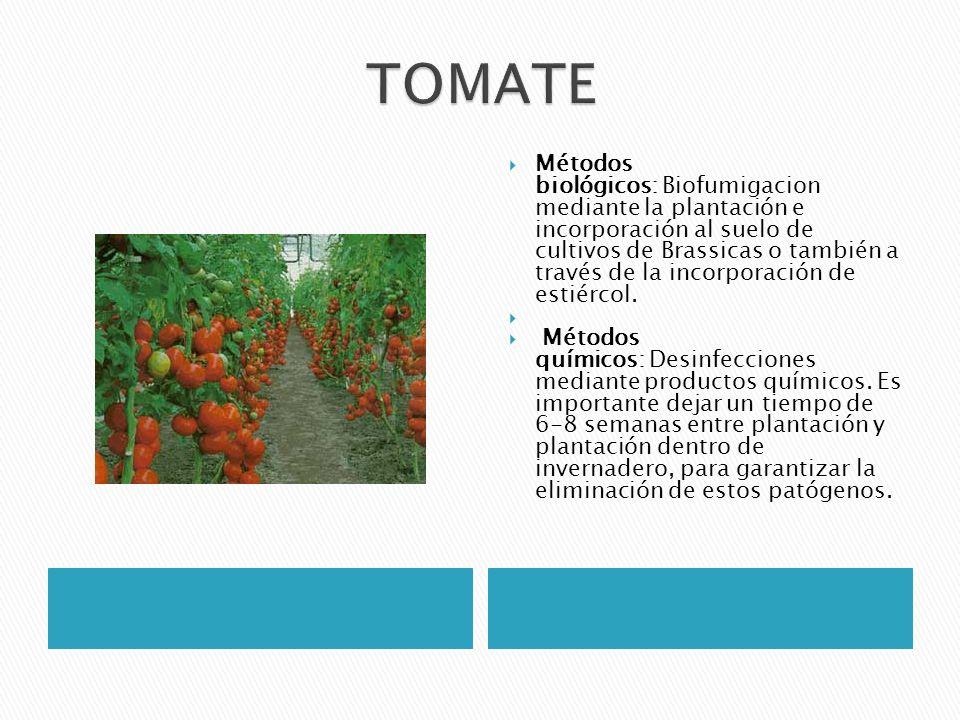 Métodos biológicos: Biofumigacion mediante la plantación e incorporación al suelo de cultivos de Brassicas o también a través de la incorporación de e