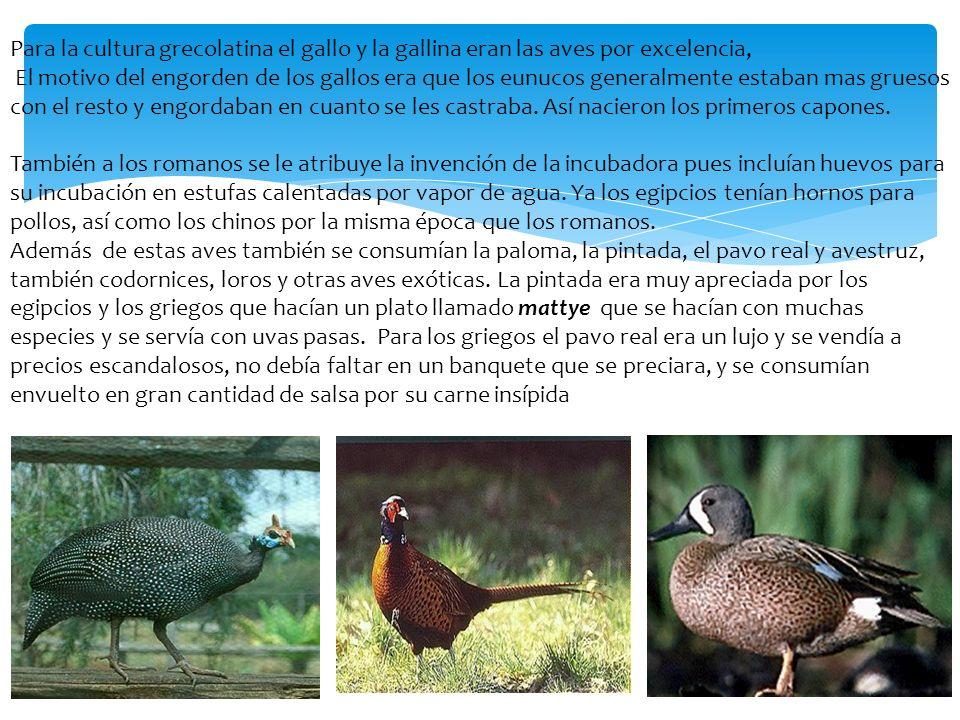 Para la cultura grecolatina el gallo y la gallina eran las aves por excelencia, El motivo del engorden de los gallos era que los eunucos generalmente