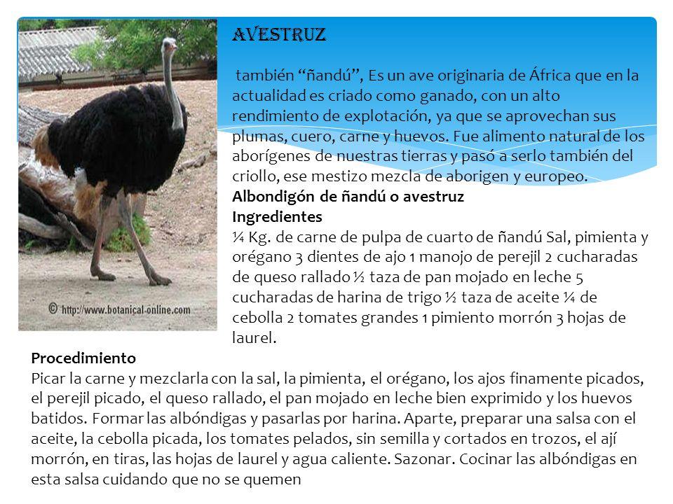 AVESTRUZ también ñandú, Es un ave originaria de África que en la actualidad es criado como ganado, con un alto rendimiento de explotación, ya que se a